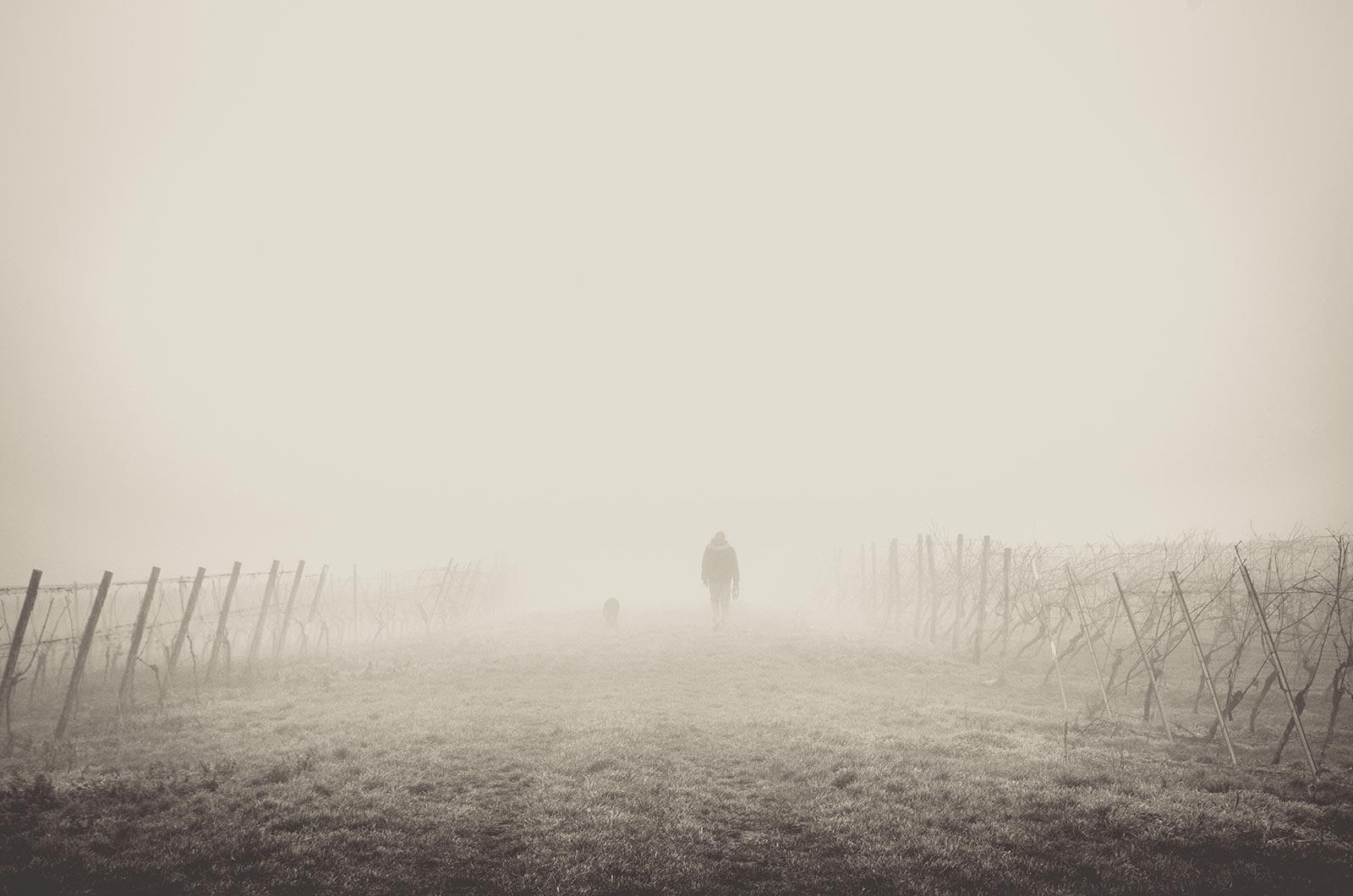 Man and dog walking down road through fog